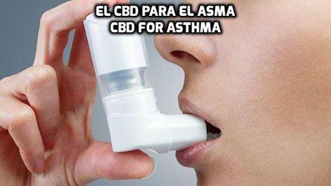 El CBD para el Asma