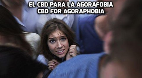 El CBD para la Agorafobia