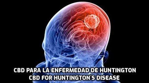 El CBD para la Enfermedad de Huntington