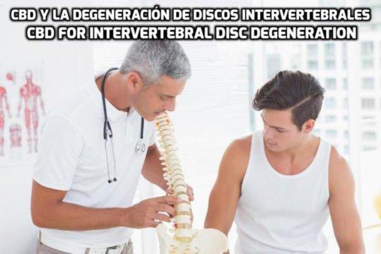 El CBD para la Degeneración de Discos Intervertebrales