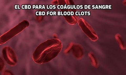 El CBD para los Coágulos de Sangre