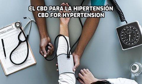 El CBD para la Hipertensión