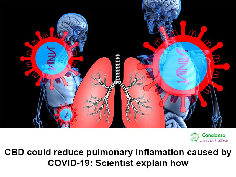 CBD could reduce pulmonary inflamation caused by COVID-19: Scientist explain how